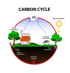 carbon cycle vector image vector image