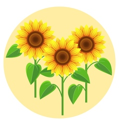 Decorative flowers sunflowers vector image