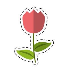 cartoon tulip flower decoration easter vector image vector image