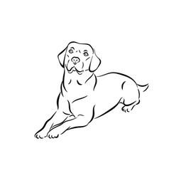 Labrador black and white outline vector