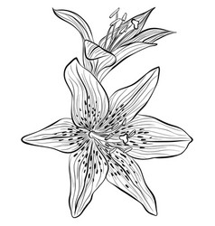 Lilies in line art style vector