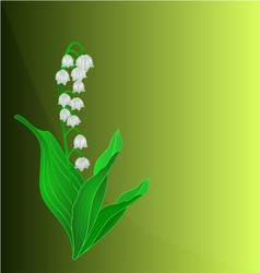 Lily of the valley spring flower green background vector