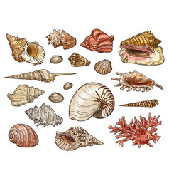 Seashells snail clam shellfish and conch vector
