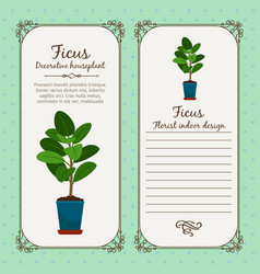 vintage label with decorative ficus plant vector image