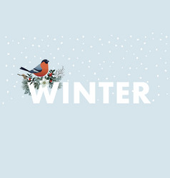 winter web banner bullfinch bird sitting on w vector image
