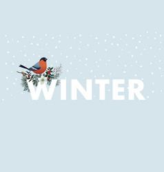 winter web banner bullfinch bird sitting on w vector image