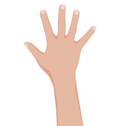 womans hand vector image