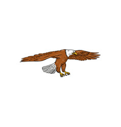 bald eagle swooping drawing vector image vector image