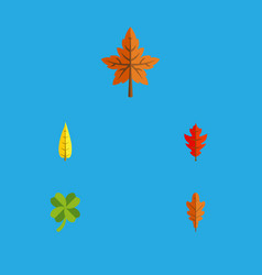 flat icon foliage set of maple leafage alder and vector image