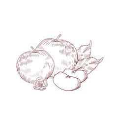 Apple juicy slices realistic vector