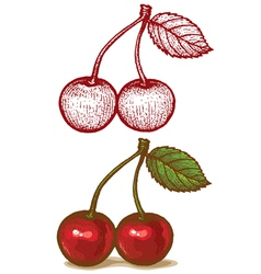Cherry retro vector image