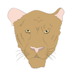 portrait of a cougar vector image