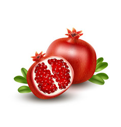 Realistic pomegranate or garnet on the white vector