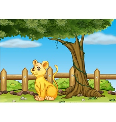 A young tiger inside the fence vector image vector image
