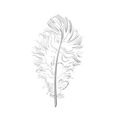 hand drawn tender fluffy black and white bird vector image vector image