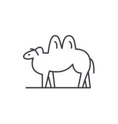 camel line icon concept camel linear vector image
