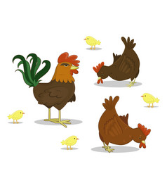 Cock hen chickens on white background farm vector