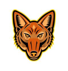 Jackal head front mascot vector