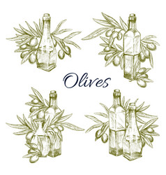 Olive oil and olives sketch icons set vector
