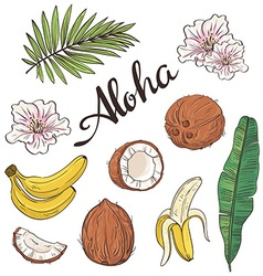 Set of aloha objects - coconut banana flowers and vector image