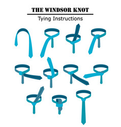 the windsor tie knot instructions isolated on vector image
