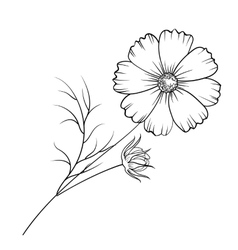 Buttercup flower isolated vector image