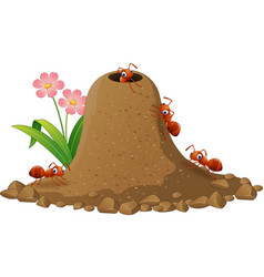 Cartoon ants colony and ant hill vector