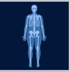 Skeleton x ray vector
