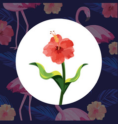 tropical flowers cartoon vector image
