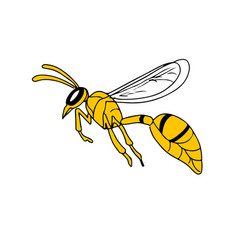 Wasp flying drawing vector