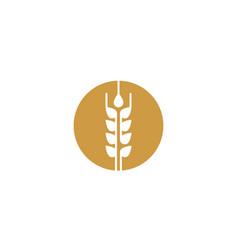 wheat logo template vector image