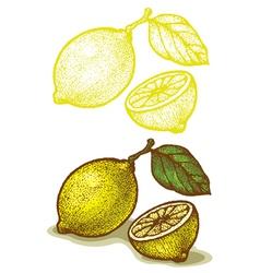 lemon retro vector image vector image