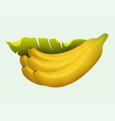 Ripe yellow banana fruits realistic juicy healthy vector