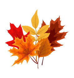 Autumn falling leaves icon isolated on white vector