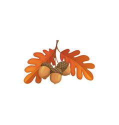 Autumn oak leaves and acorn cartoon icon vector