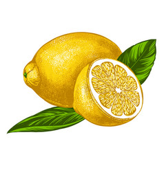 fruit lemon with leaves isolated on white vector image