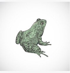 hand drawn colorful halloween scary toad or frog vector image
