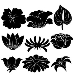 Black plants vector image