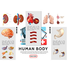 cartoon human body infographic template vector image
