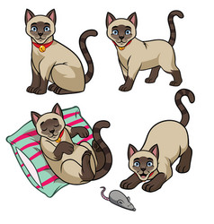 cute siamese cat set vector image