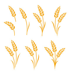 hand drawn set of golden wheat ears vector image