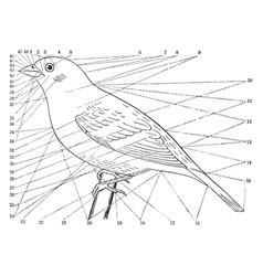 Topography a bird vintage vector