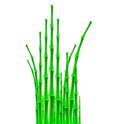 bamboo sticks over white background vector image