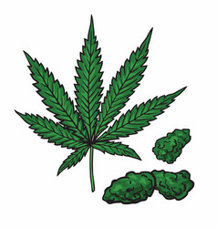 Cannabis marijuana leaf and buds drawing vector