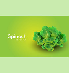 Spinach in format vector