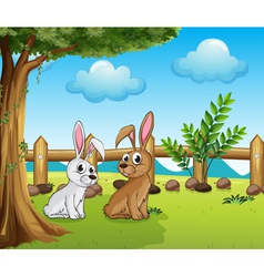 Two bunnies inside the fence vector image
