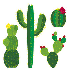 Cactus colored vector