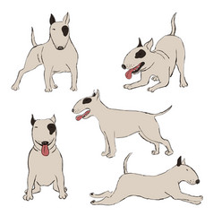 collection bull terrier dog icons vector image