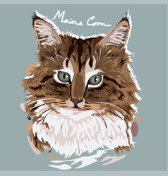 maine coon painting poster vector image
