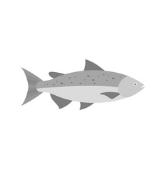 Salmon fish flat design vector